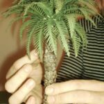 Tutorial: come realizzare le Palme